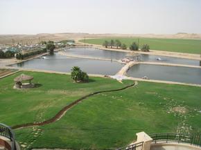 Saudi Arabian Farm Project